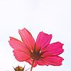 idella: (flower)