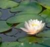 lotusmin: (pic#7673154)