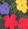danicast: (spring)