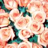 downpour: (florals)