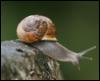 arliss: (copse snail)