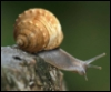 arliss: (snail)