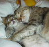 omura: (cat)