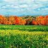 jaxadorawho: (Seasonal ☆ Autumn ~ field trees sky)
