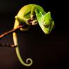 peacemeal: A sleepy lizard on a branch (Default)
