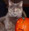 teresafloyd: (halloween)