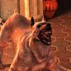 reanimatrix: The dog is STILL the best part, yo. (DA2 dog)