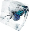 rain_and_snow: Image of a butterfly in an ice-cube (ice, butterfly)