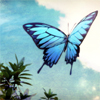 orphanblue: (butterfly)
