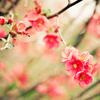 eardcwen: (spring)