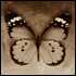 rain_and_snow: Image of a Victoriana style butterfly (old butterfly)