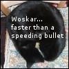 coughingbear: black cat asleep on a chair with text 'Woskar: faster than a speeding bullet' (woskar)