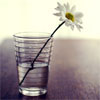 hyperbole: An IKEA-like glass of water with a flower in it. (Default)