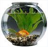 juliacw: (aquarium)