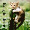 "sashajwolf: photo of kitten on a cactus with text ""hang in there"" (hang in there)"