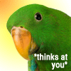 holdouttrout: parrot that says *thinks at you* (telepathic_parrot)