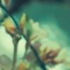 shinodabear: (hannibal - flora)