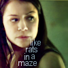 "veleda_k: Sarah from Orphan Black. Text says, ""Like rats in maze."" (Orphan Black: Sarah)"