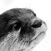 callowyn: (otter)