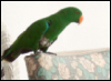 mindways: Parrot on a chair (crosspost, parrot)