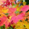 spikesgirl58: (autumn leaves)