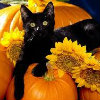 spikesgirl58: (cat on pumpkin)
