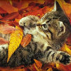 spikesgirl58: (kitten in leaves)