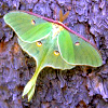 spikesgirl58: (gypsy moth on tree)