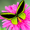 spikesgirl58: (butterfly on flower)
