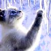 spikesgirl58: (kitten and ice)