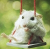 spikesgirl58: (swinging mouse)