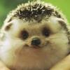 spikesgirl58: (happy hedgehog)