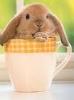 spikesgirl58: (bunny in cup)
