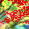 spikesgirl58: (red leaves 1)