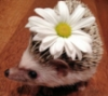 spikesgirl58: (decorated hedge hog)