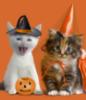 spikesgirl58: (Halloween kittes)