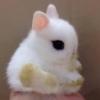 spikesgirl58: (Too Cute)