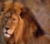 filmnoir: (Animals2)