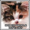 "melanthiabast: A beautiful calico kitten asks ""Why do people hurt us?"" (Default)"