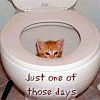 melchar: kitty sitting in a toilet (toidy kitty)