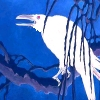 onewhitecrow: goofy-looking albino raven on blue background (coyote)