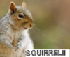 belluthien: (SQUIRREL!)
