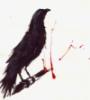 komiiro: A raven on a white field with random splatters of blood. (The Raven)