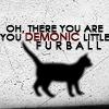 violetcatgirl: (furball)
