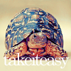 fadagaski: (take it easy turtle)