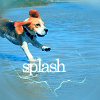 fadagaski: (splash beagle)
