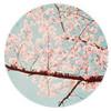 coffee_flowers: (cherry blossom)