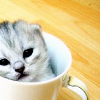 athra: ([misc] KITTEH CUP)