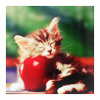 athra: ([misc] kitty + apple)