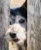 safoelj: (пес в заборе) (Default)